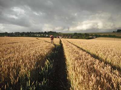Slicing Wheat