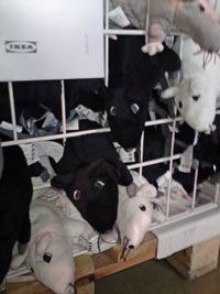 IKEA's Rats